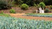 vista previa del artículo Jornada de Agricultura Ecológica por el Día del Medio Ambiente