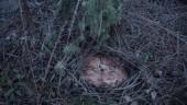 vista previa del artículo Saber más sobre los hongos en Valladolid
