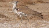 vista previa del artículo Rutas Ornitológicas en Valladolid
