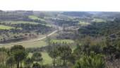 vista previa del artículo El sendero de la seta, en medio de pinares