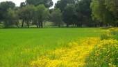 vista previa del artículo Foncastín de Oliegos, un valle tranquilo