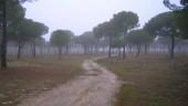 vista previa del artículo Portillo una de las localidades más importantes de Valladolid