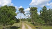 vista previa del artículo Hornillos de Eresma, senderismo en Valladolid