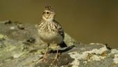 vista previa del artículo Observar aves en la Tierra del Vino