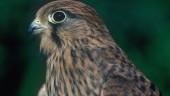 vista previa del artículo Observación de aves en Melgar de Arriba