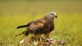 vista previa del artículo Fotografiando aves en Cuenca de Campos