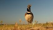 vista previa del artículo Caminando en La Unión de Campos, cámara en mano… pájaros volando