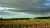 vista previa del artículo La Tierra de Campos, curiosidades de una tierra para visitar todo el año