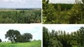 vista previa del artículo Safaris fotográficos por la Tierra de Capos: bosques