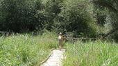 vista previa del artículo Zonas naturales para descubrir en Valladolid